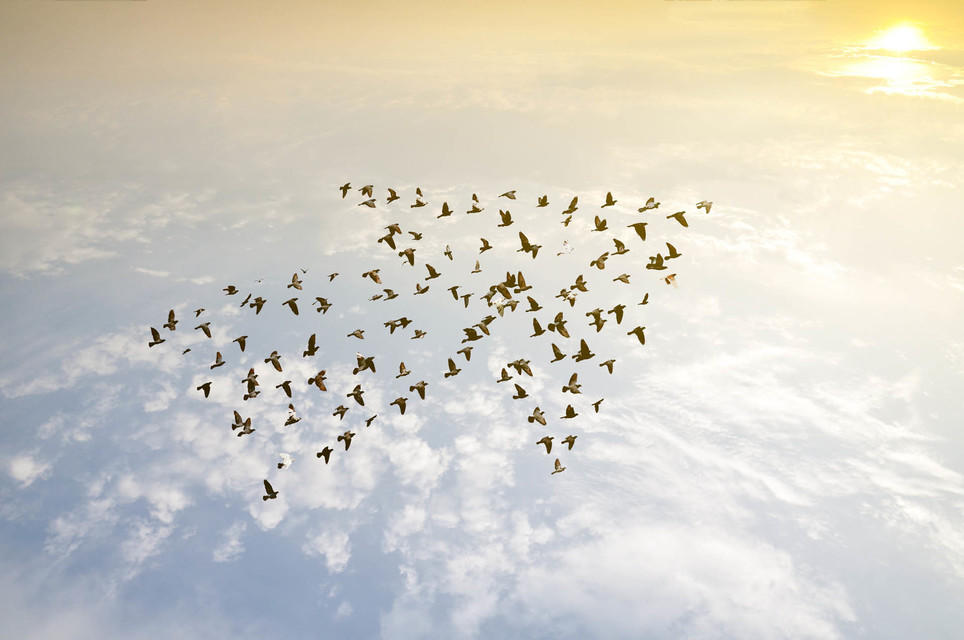 Flock of Birds flying in same direction - The Power of Team – Orla Scott, Team Leadership Coach