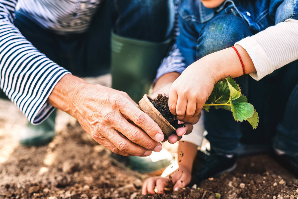 Older Person showing a child how to garden - The Power of Learning from Individual Coaching Programme – Orla Scott, Coaching Expert